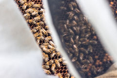 Точка зрения Beekeeper стоковые фото