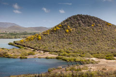 Точки желтого цвета - деревья poui poui в цветени Стоковое Фото