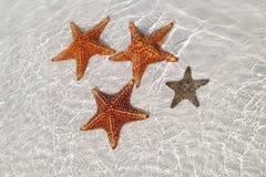 точная звезда моря Стоковое Изображение RF