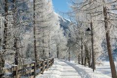 Точный ландшафт гор зимы день солнечный Спад зимы Яркие цвета Река леса леса зимы Ветви в hoar Стоковое фото RF