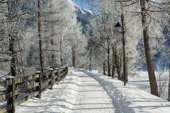 Точный ландшафт гор зимы день солнечный Спад зимы Яркие цвета Река леса леса зимы Ветви в hoar Стоковая Фотография