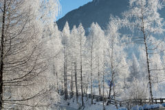 Точный ландшафт гор зимы день солнечный Спад зимы Яркие цвета Река леса леса зимы Ветви в hoar Стоковая Фотография RF