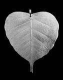 точный серебр известки Стоковая Фотография
