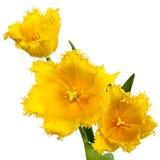 3 желтых цветка Стоковое Фото