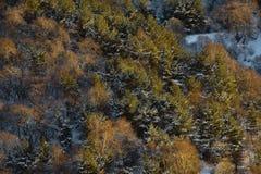 Точн-текстурированная предпосылка картины леса осени в желтых тонах с элементами снега осматривает сверху Стоковые Фотографии RF