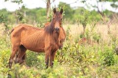 Тощая зеленая лошадь на зеленой траве Стоковое Изображение RF
