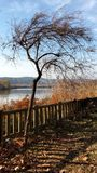 Тощее дерево озером Стоковые Фото