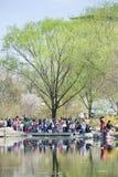 Толпитесь на парке Yuyuantan во время цветения вишневого дерева весны, Пекина, Китая Стоковые Изображения