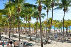 Толпить зона пляжа с пальмами Стоковая Фотография RF