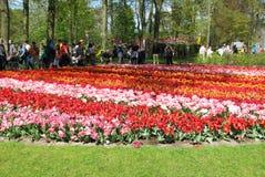 Толпить парк цветка стоковое фото rf