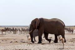 Толпить waterhole с слонами Стоковая Фотография