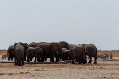 Толпить waterhole с слонами Стоковое Изображение RF