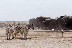 Толпить waterhole с слонами Стоковые Фото