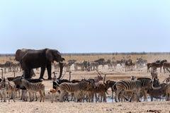 Толпить waterhole с слонами Стоковые Изображения