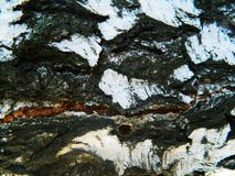Толстая расшива белизны, коричневых и серых белой березы Стоковое фото RF