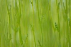 Толстые цветочные стебли Стоковые Фото