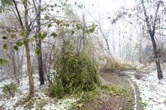 Толстый замерли слой льда, который ветвям сформировал BingGua, блестящий и просвечивающий получите освобожданный, очень хороший Стоковые Фотографии RF
