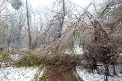 Толстый замерли слой льда, который ветвям сформировал BingGua, блестящий и просвечивающий получите освобожданный, очень хороший Стоковое Изображение