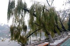 Толстый замерли слой льда, который ветвям сформировал BingGua, блестящий и просвечивающий получите освобожданный, очень хороший Стоковое Изображение RF