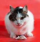 Толстый пушистый белый кот при пятна сидя на сумке валериана дальше стоковые изображения
