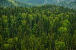 толстый туман утра в лесе лета Стоковая Фотография
