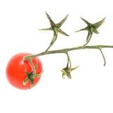 Только один томат вишни на ветви изолированной на белизне. Стоковые Изображения