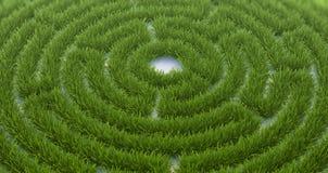 Трава лабиринта Стоковая Фотография RF