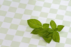 Трава базилика на зеленой Checkered предпосылке Стоковое фото RF