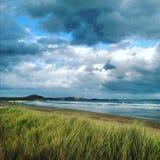 Трава берега моря Стоковое Фото