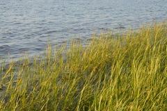 Трава берега стоковые изображения rf