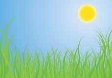 трава богато украшенный Стоковые Изображения