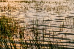 Трава болота низкой страны Южной Каролины на заходе солнца после потока стоковое изображение rf