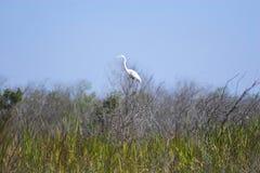 трава болотистой низменности птиц Стоковые Фотографии RF