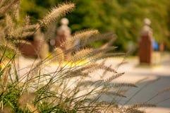 Трава Брайна Стоковое Фото