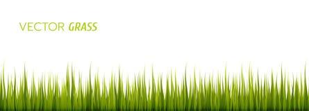 Трава вектора зеленая на белой предпосылке стоковое фото rf