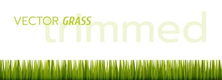 Трава вектора зеленая на белой предпосылке стоковое изображение
