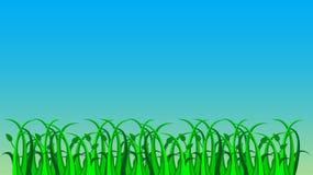 Трава, вектор Стоковая Фотография RF