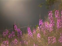 Трава вербы Стоковые Изображения