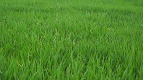 Трава весной видеоматериал