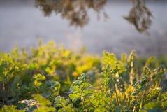 Трава весны в заходящем солнце Стоковая Фотография RF