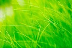 Трава весны в свете солнца стоковое изображение rf