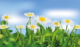 Трава весны зеленые и chomomile ландшафт вектора 3d реалистический Реалистическое chomomile в голубой предпосылке иллюстрация штока