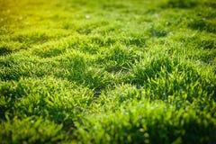 Трава весны зеленая на зеленой предпосылке принципиальная схема экологичности Стоковое фото RF