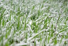 Весна Snowy стоковые изображения rf