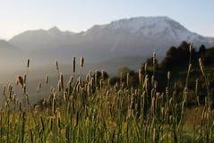 Трава весны Стоковое фото RF