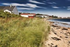 Трава движения моря зеленая Стоковое Изображение RF