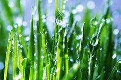 трава влажная Стоковое фото RF