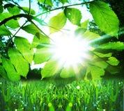 трава влажная Стоковые Фото