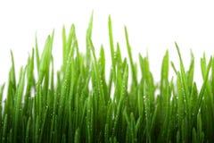трава влажная Стоковая Фотография