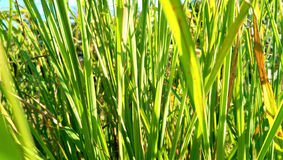 Трава внешняя Стоковая Фотография